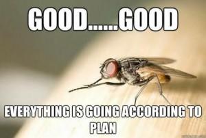 fly - plan